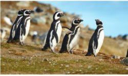 טיול לדרום אמריקה – מסלול מקיף כולל פטגוניה, איי פוקלנד ופוארטו מדרין
