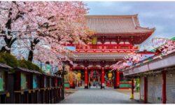 טיול ביפן בתקופת פריחת הדובדבן